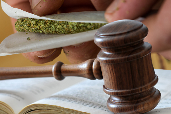 America's Marijuana Laws: A Tangle of Contradictions